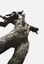 Venus-Baum I