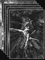 Bäume der Insel Vilm